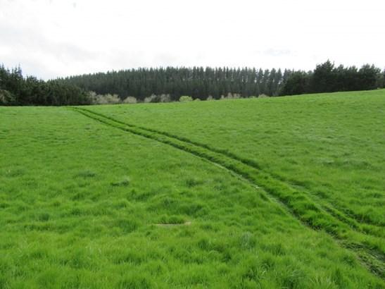 1118 Ugly Hill Road, Waipukurau, Central Hawkes Bay - NZL (photo 4)