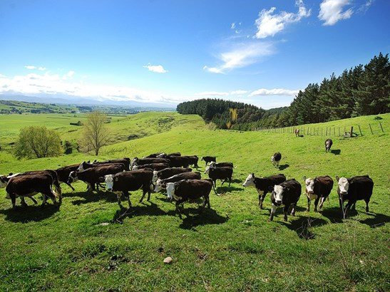 - Gladstone Braes, Gladstone, Carterton - NZL (photo 2)