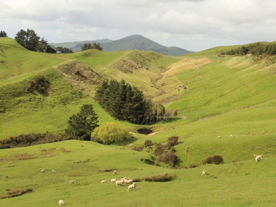 1063 Ngapaeruru Road, Dannevirke, Tararua - NZL (photo 3)