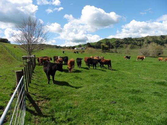 370 State Highway 3, Te Kuiti, Waitomo District - NZL (photo 2)