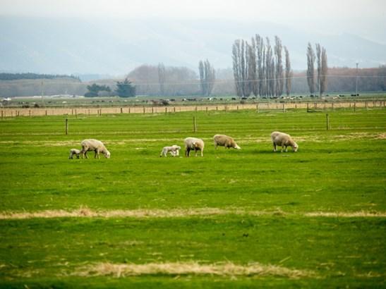 - Maori Road, Waimate - NZL (photo 4)