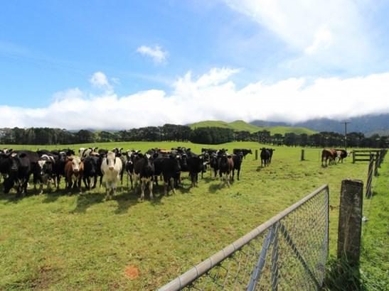 - Tamaki West Road, Dannevirke, Tararua - NZL (photo 3)