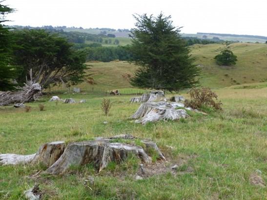 145 Ranfurly Road, Feilding - NZL (photo 5)