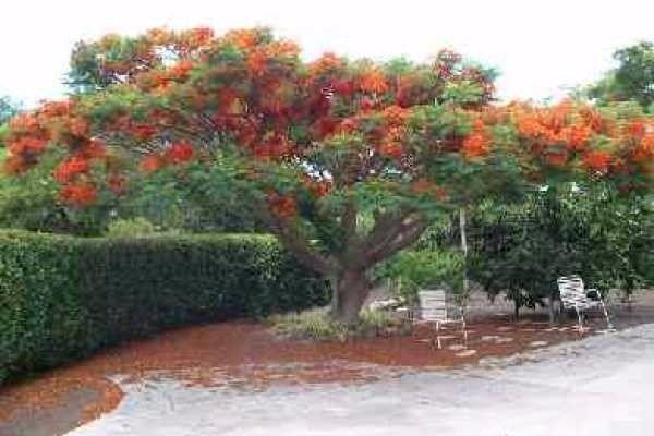 68-1757 Laie St 89, Waikoloa, HI - USA (photo 3)