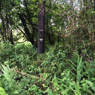 11-1418 Anthurium St 8135, Mountain View, HI - USA (photo 4)