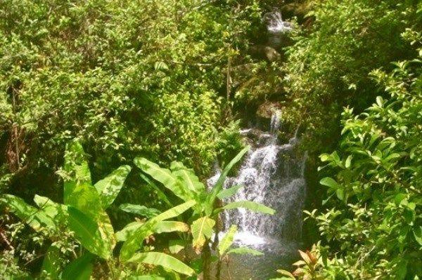 32-413 Piha Kahuku Rd 12, Ninole, HI - USA (photo 4)