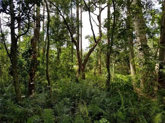 Unimproved Land - LAND O LAKES, FL (photo 5)