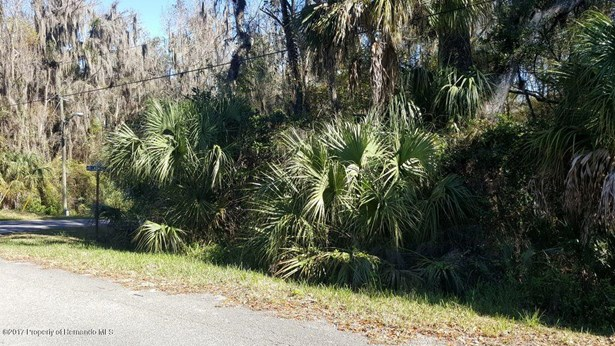 Vacant Land - Brooksville, FL (photo 3)