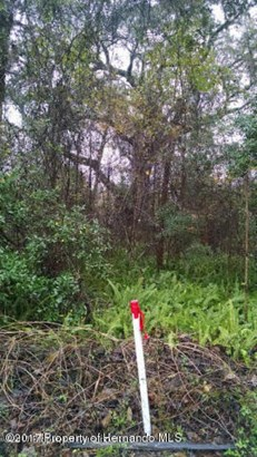 Acreage - Ridge Manor, FL (photo 4)