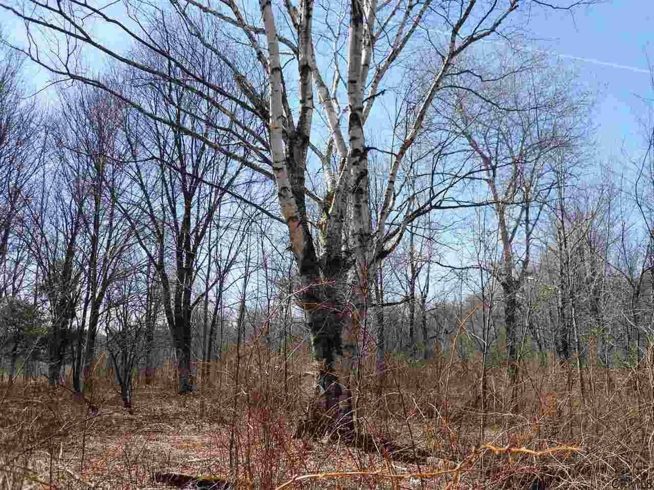 County Rt 408, Westerlo, NY - USA (photo 1)
