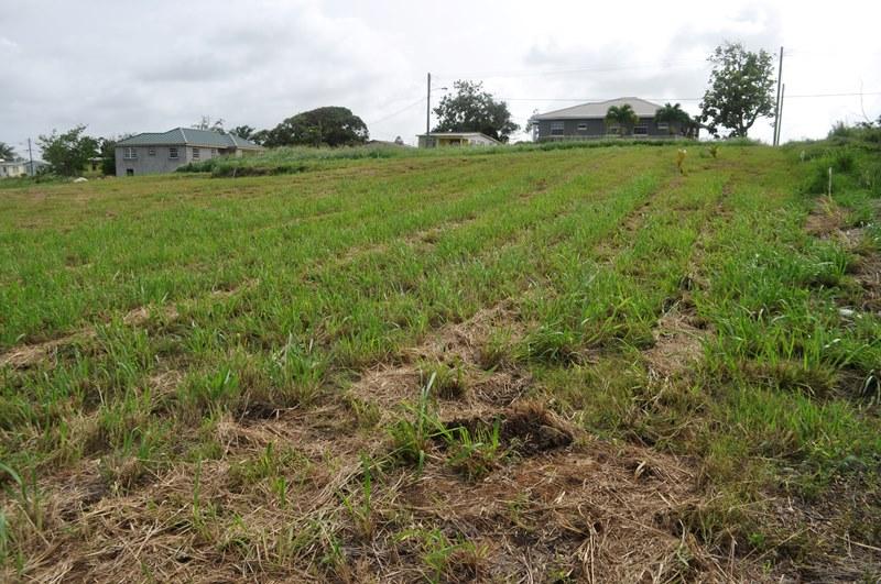 Rosegate Meadows Phase 3 Lot 17, St. John - BRB (photo 3)
