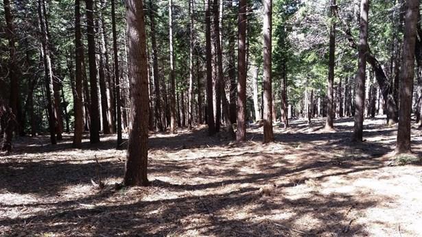 0 Moody Ridge, Gold Run, CA - USA (photo 1)