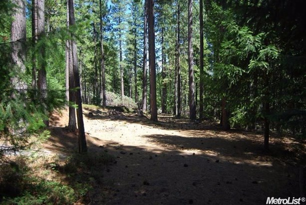 4841 Mt Pleasant Drive, Grizzly Flats, CA - USA (photo 2)