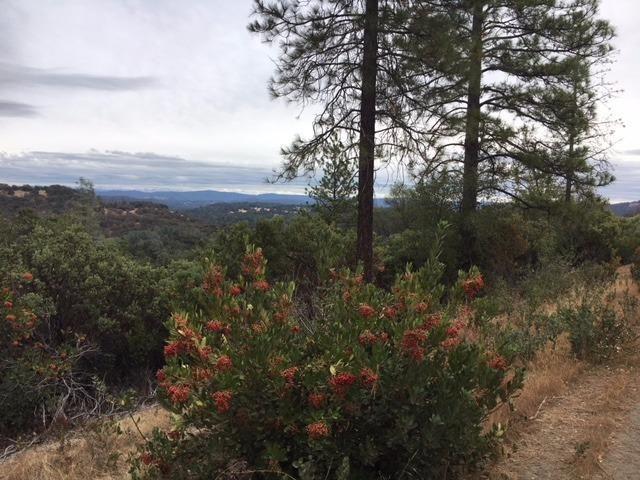 40 Vintage Trail, El Dorado, CA - USA (photo 5)