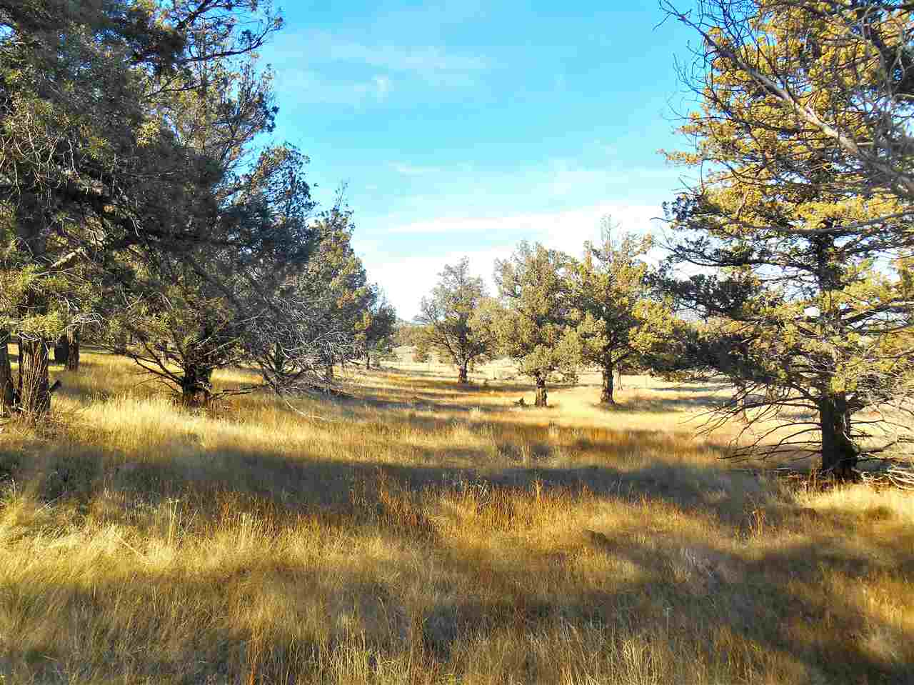 Lot 17 Wildhorse Place , Weed, CA - USA (photo 4)