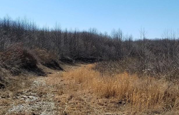 Acreage - Bloom Twp, OH (photo 4)