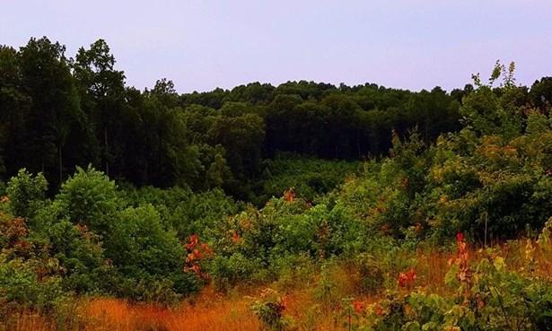 Acreage - Bloom Twp, OH (photo 5)