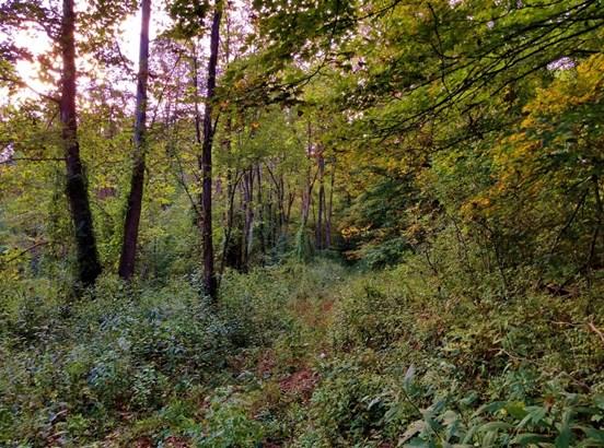 Acreage - Vinton, OH (photo 3)