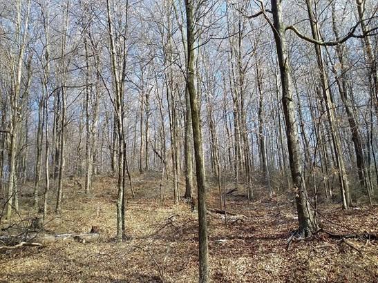 Acreage - Brushcreek Twp, OH (photo 2)