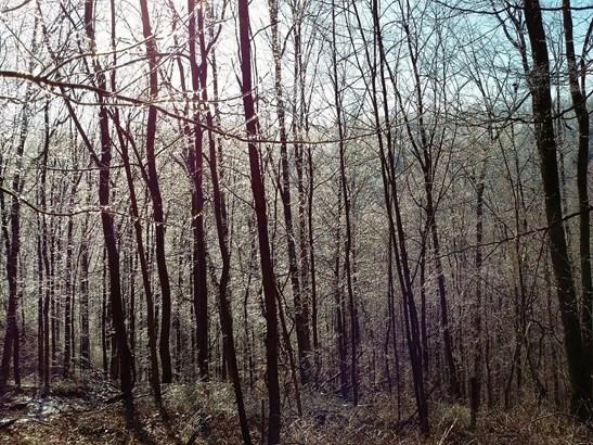 Acreage - Brushcreek Twp, OH (photo 3)