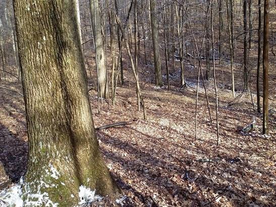 Acreage - Brushcreek Twp, OH (photo 4)