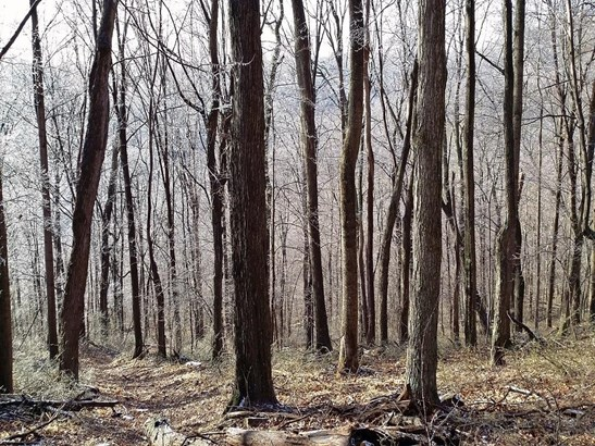 Acreage - Brushcreek Twp, OH (photo 5)