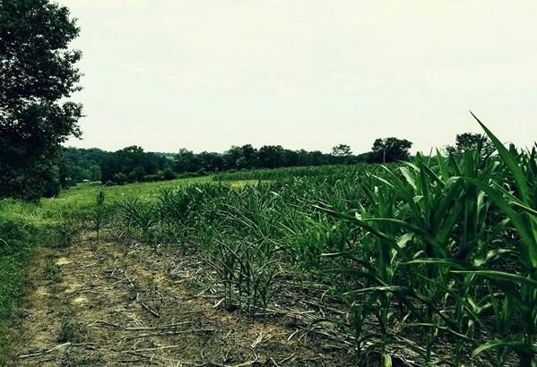 Acreage - Sprigg Twp, OH (photo 4)