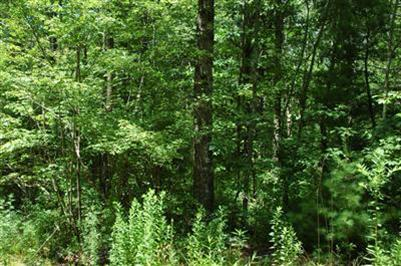 0 Tearall Rd - Lot 90 90, Raynham, MA - USA (photo 2)