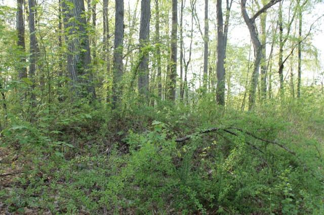44 Deer Run Road, Brookfield, CT - USA (photo 2)