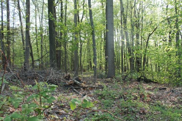 44 Deer Run Road, Brookfield, CT - USA (photo 4)