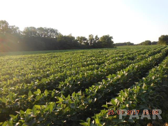 Farms - LACON, IL (photo 5)