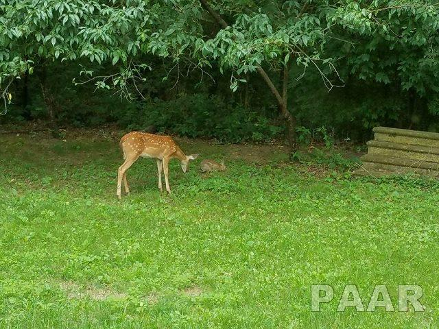 Ranch, Single Family - Havana, IL (photo 5)