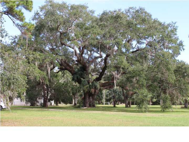 Detached Single Family - APALACHICOLA, FL (photo 5)
