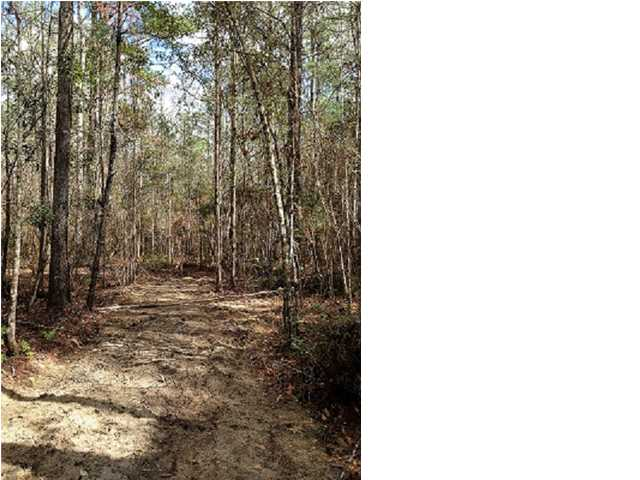 Residential Lots/Land - WEWAHITCHKA, FL (photo 1)