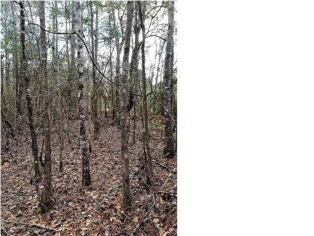 Residential Lots/Land - WEWAHITCHKA, FL (photo 3)
