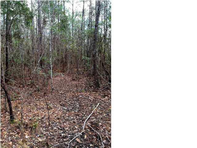 Residential Lots/Land - WEWAHITCHKA, FL (photo 4)