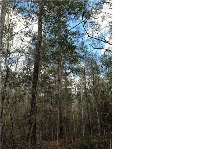 Residential Lots/Land - WEWAHITCHKA, FL (photo 5)