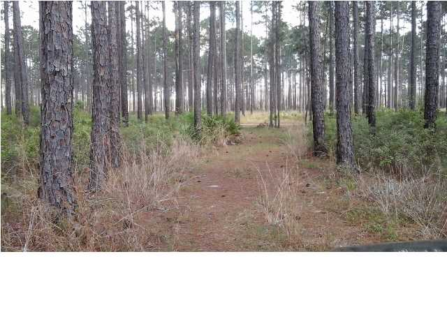 Residential Lots/Land - BRISTOL, FL (photo 5)