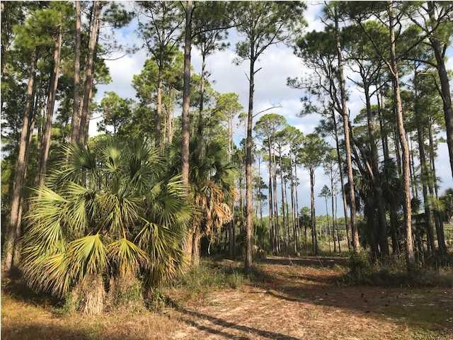 Residential Lots/Land - PORT ST. JOE, FL (photo 4)