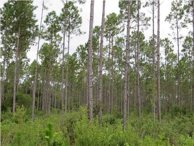Farm/Timberland - CARRABELLE, FL (photo 3)