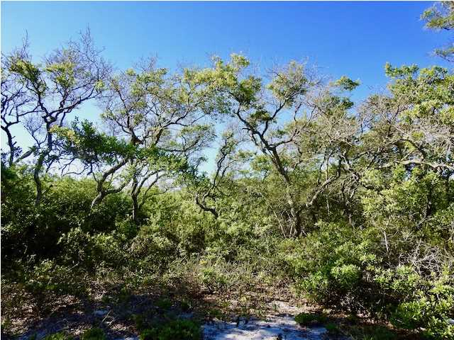 Residential Lots/Land - CARRABELLE, FL (photo 5)