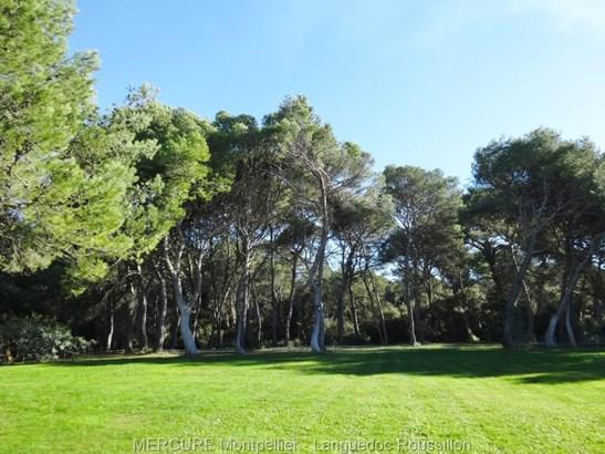 Montpellier - FRA (photo 4)