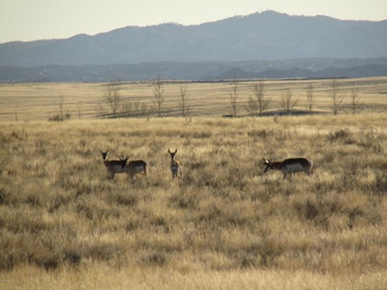 Residential - Prescott Valley, AZ (photo 4)