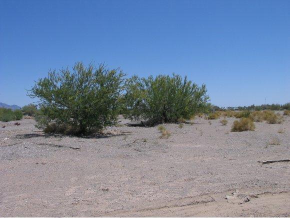 Residential - Quartzsite, AZ (photo 4)