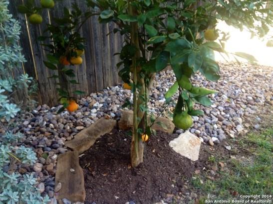 310 Amberdale Oak, San Antonio, TX - USA (photo 4)