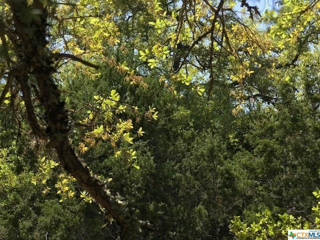 1118 Madrone, Fischer, TX - USA (photo 5)