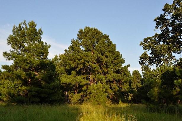 0000 Fm 153, La Grange, TX - USA (photo 2)