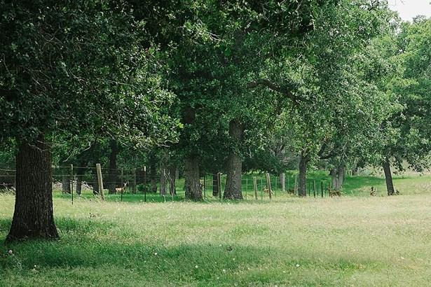 1996 Reiss, West Point, TX - USA (photo 5)