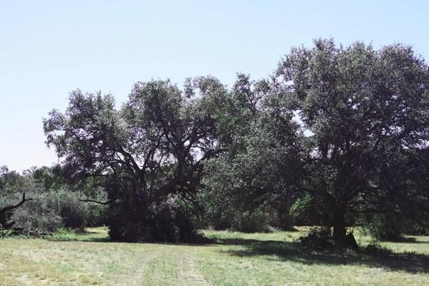 000 Mueller/cottonwood, La Grange, TX - USA (photo 1)