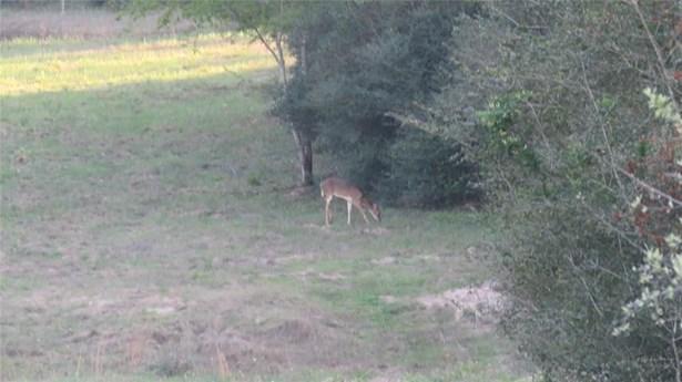 15324 Sycamore, Cat Spring, TX - USA (photo 5)